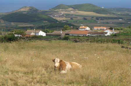 Trekking serra branca praia Graciosa Azores