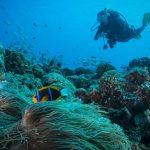 Fare attività subacquee alle Azzorre