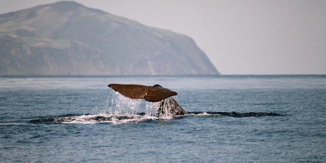 Avvistamento di balene