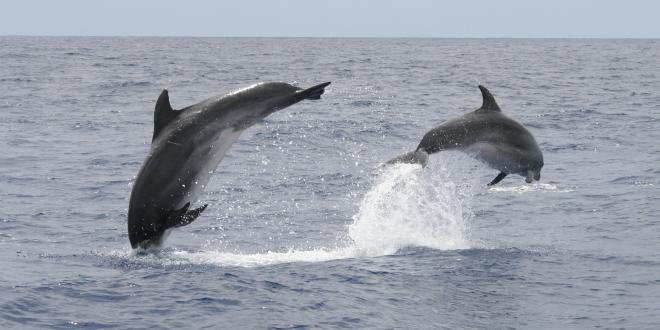 Delfini in mare aperto