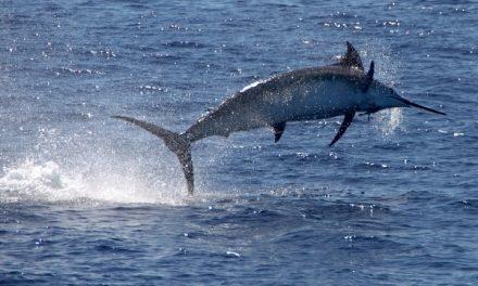 Pesca d'alto bordo