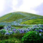 Ortensie a Faial, Azzorre