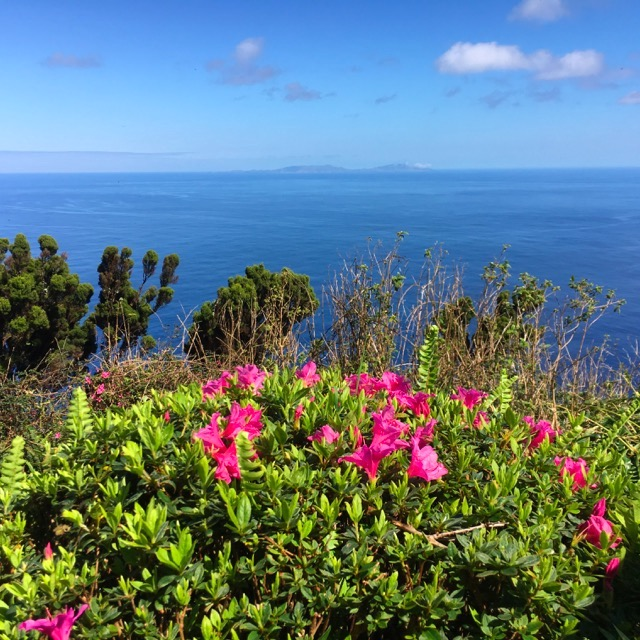 Erica spontanea a Sao Jorge, Isole Azzorre