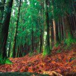 Foreste sui fianchi del Vulcano, Azzorre