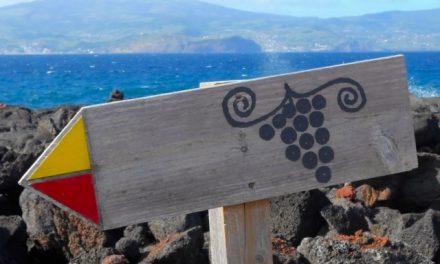 La rotta dei Vini, Pico – Azzorre